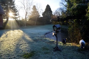 A frosty morning