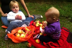 Getting involved with apple picking